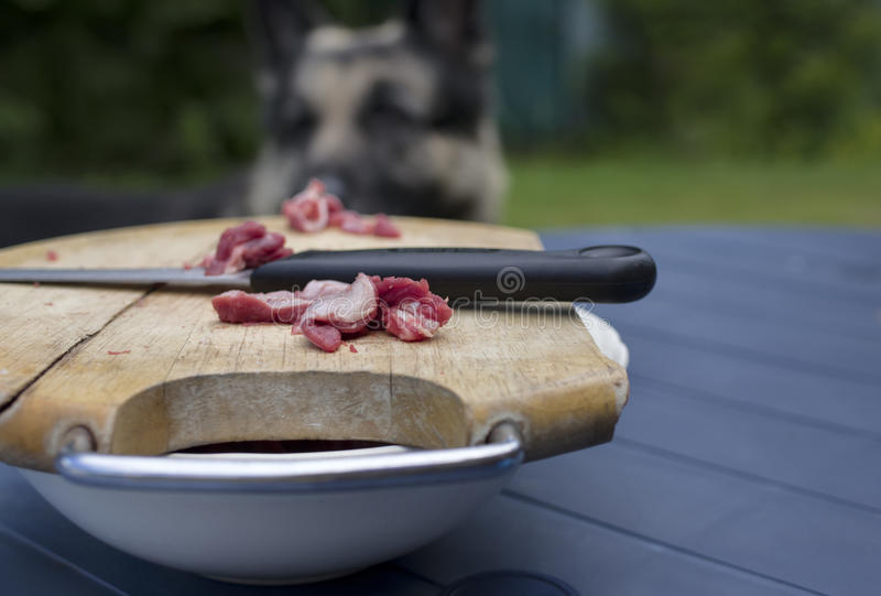 Raw Meat And Hungry Dog royalty free stock images