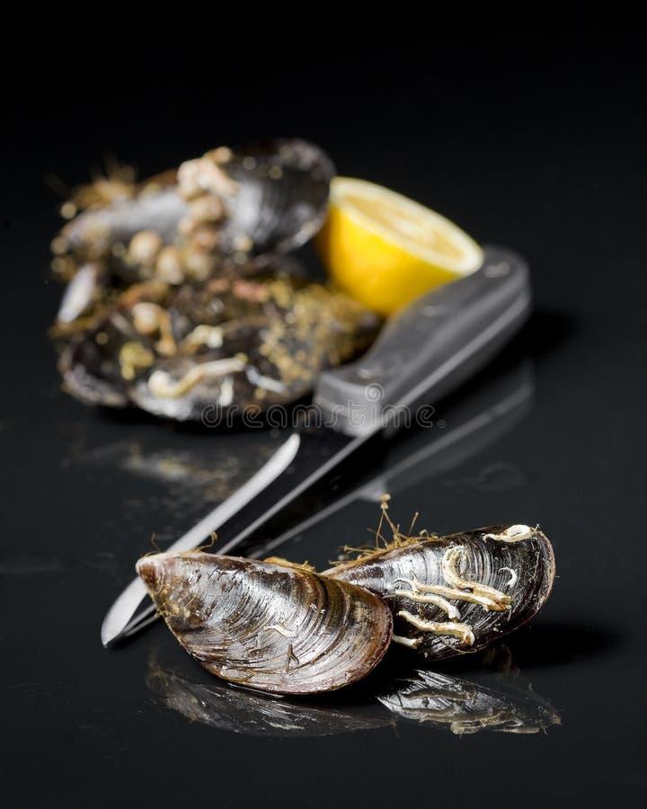 Raw mussel food