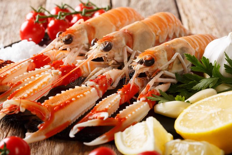 Raw Nephrops norvegicus, Norway lobster, Dublin Bay prawn, langoustine or scampi close-up with Ingredients. horizontal stock image