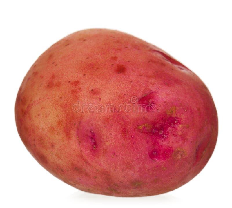Raw new potato stock image
