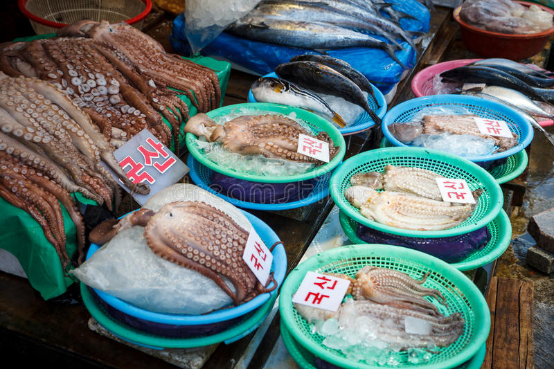 Raw Octopus at the Market royalty free stock photo