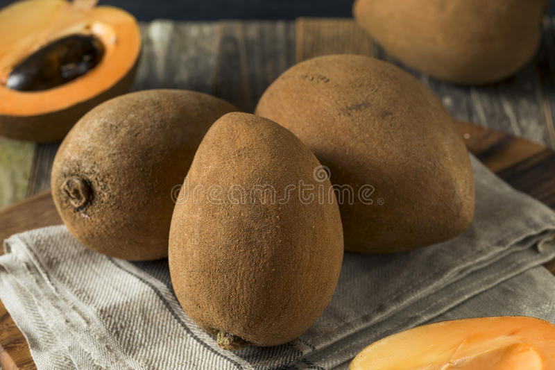 Raw Organic Brown Mamey Fruit stock image