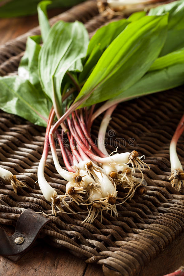 Raw Organic Green Ramps. Ready to Cook With stock photography