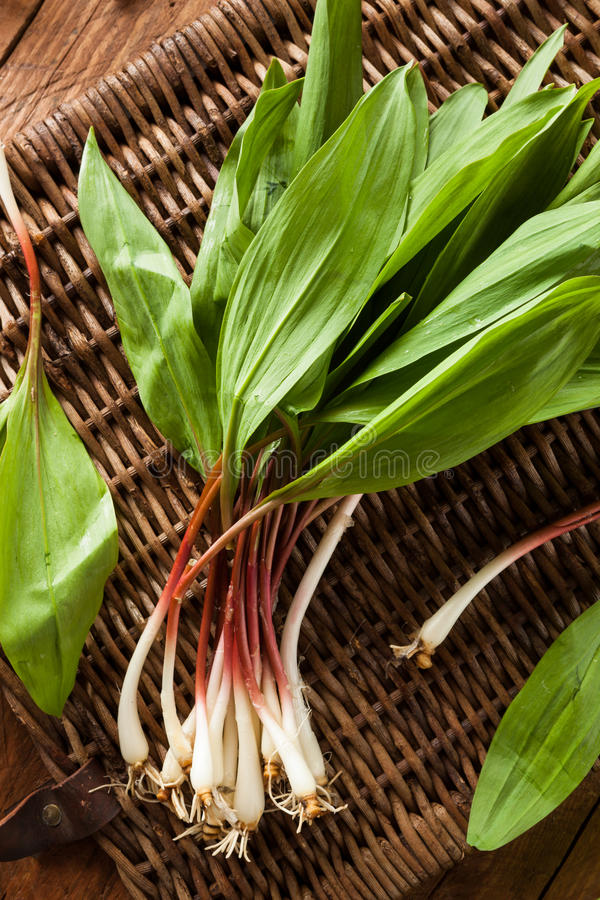 Raw Organic Green Ramps. Ready to Cook With stock photo