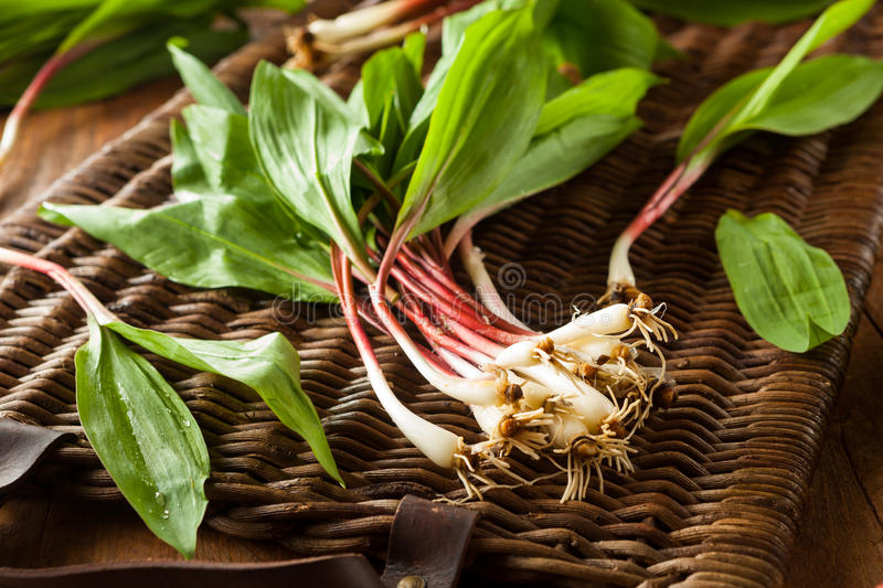 Raw Organic Green Ramps. Ready to Cook With stock image