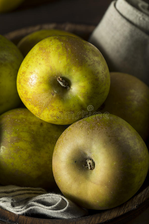 Free Raw Organic Heirloom Golden Russet Apples Royalty Free Stock Image - 81663866
