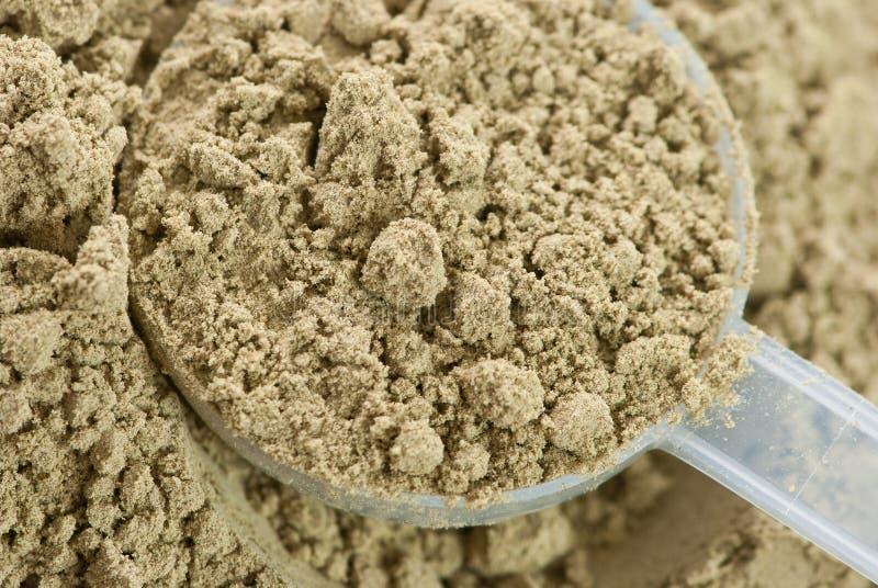 Raw organic hemp protein powder. Close up of plastic measuring scoop filled with raw organic hemp protein powder stock photos