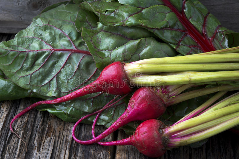 Raw Organic Miniature Red Candy Stripe Beets with Swiss Chard stock images