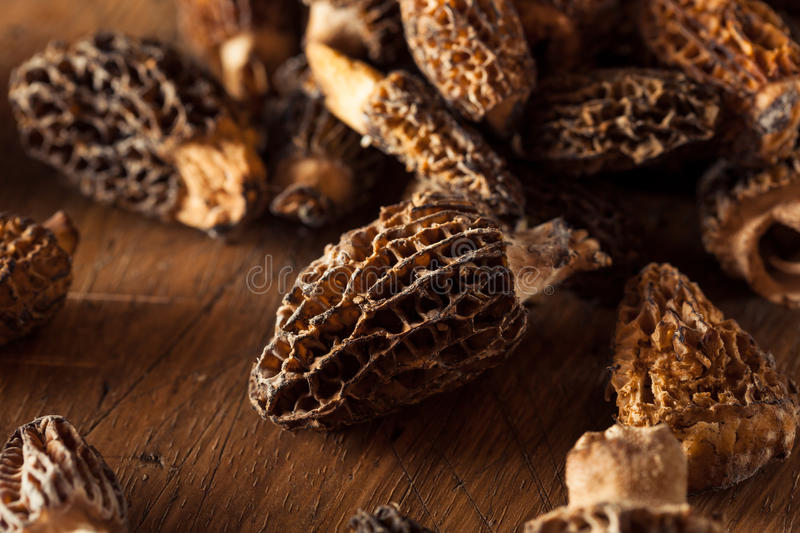 Raw Organic Morel Mushrooms stock photos