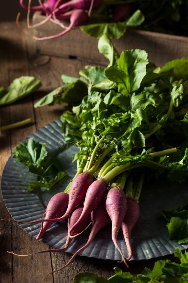 Raw Organic Purple Radishes stock image