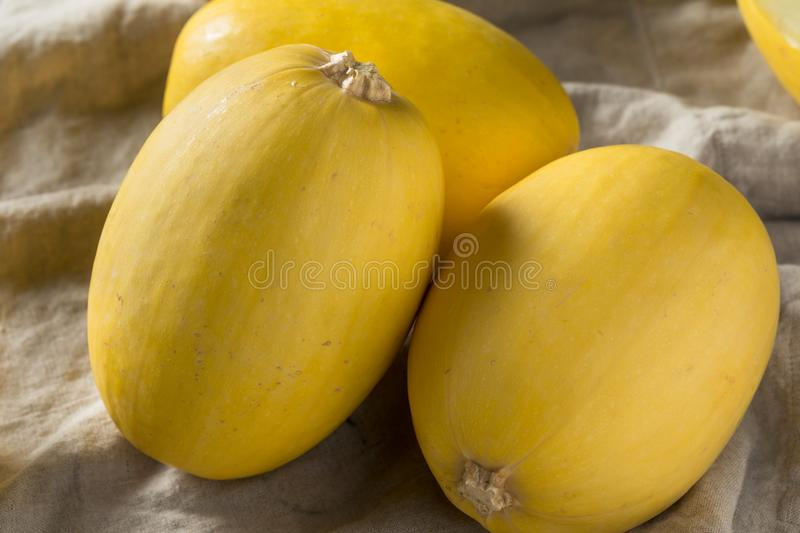 Raw Organic Yellow Spaghetti Winter Squash stock image