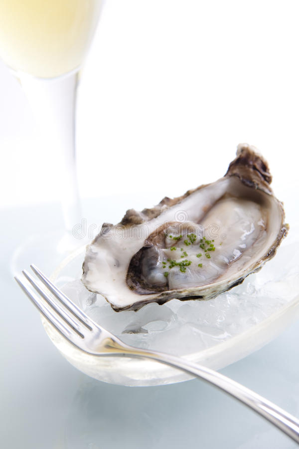 Raw Oyster on Ice royalty free stock photo