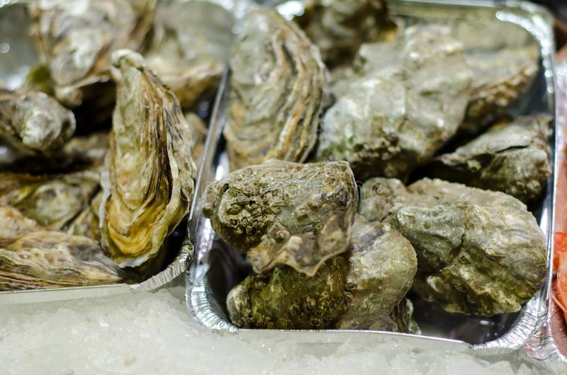 Raw oyster stock image. Image of shellfish, fresh, oyster ... - photo#17