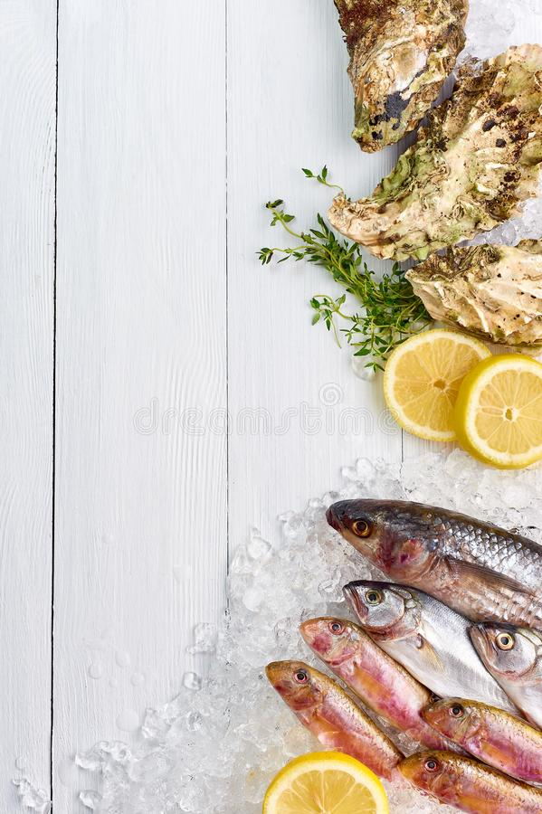 Raw oysters and fish lays in ice at white wooden table top decorated with lemon and microgreens royalty free stock photography