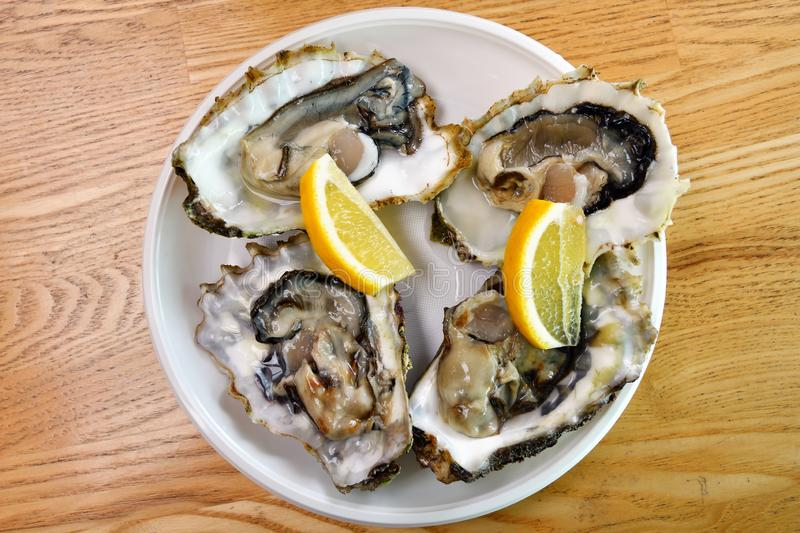 Raw oysters with lemon royalty free stock photo