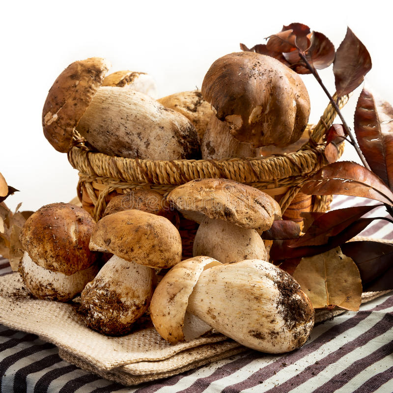 Raw porcini mushrooms stock photography