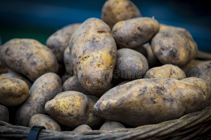 Raw potatoes in baskets on the market. Close up shot royalty free stock photos