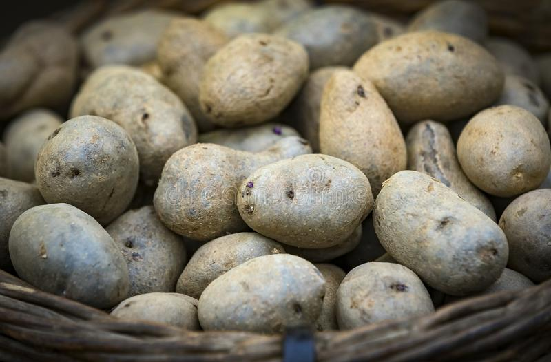 Raw potatoes in baskets on the market royalty free stock photo