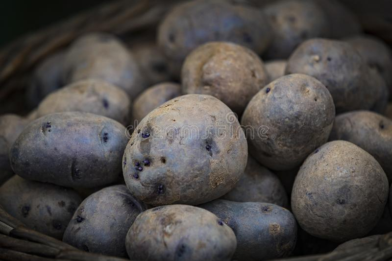 Raw potatoes in baskets on the market. Close up shot stock image