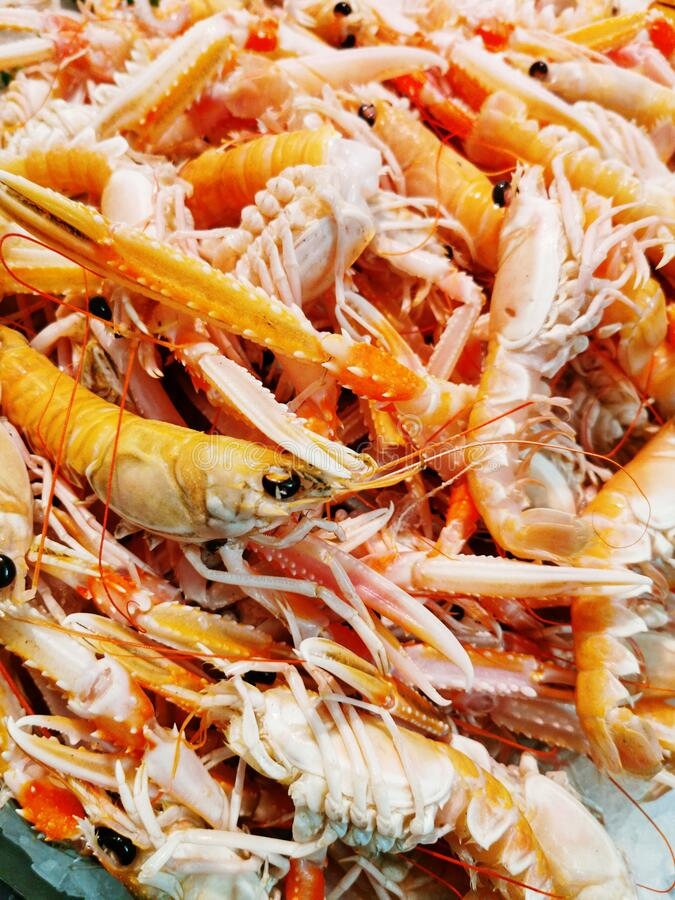 Raw prawns  background from Cork royalty free stock image