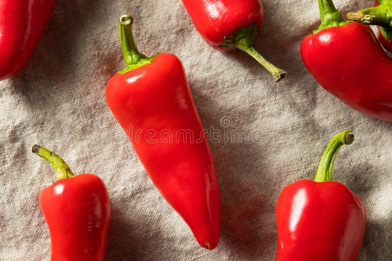 Raw Red Organic Fresno Peppers. REady to Cook royalty free stock images