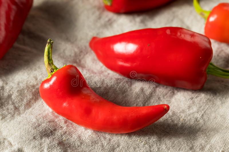 Raw Red Organic Fresno Peppers. REady to Cook stock photography