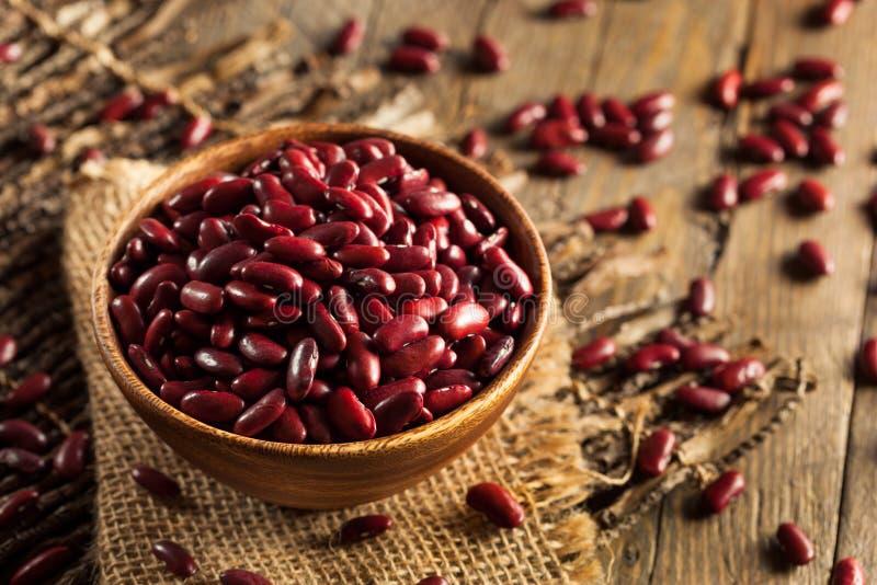 Raw Red Organic Kidney Beans stock photo