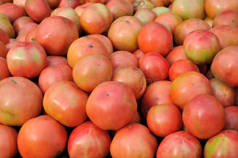 Raw red tomato