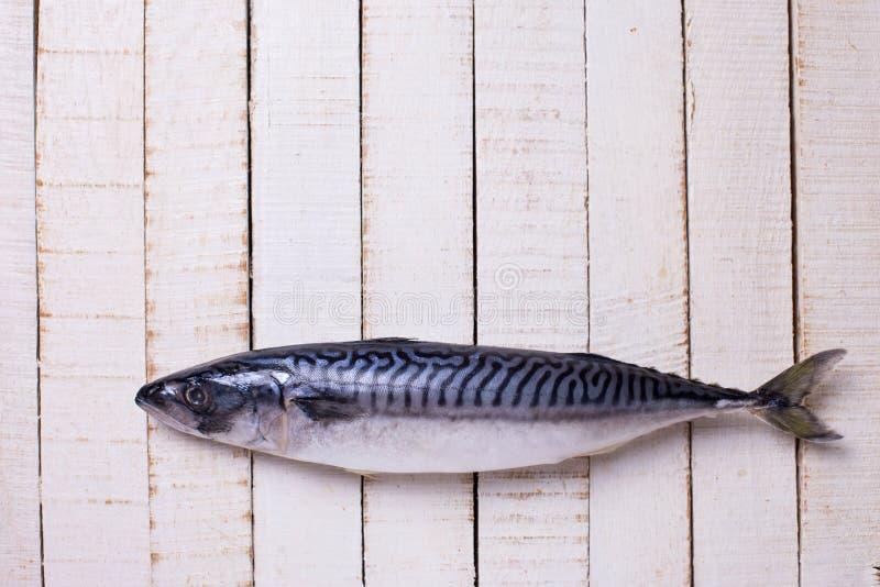 Raw sardine fish. Fresh raw sardine on white wooden background. Selective focus royalty free stock images