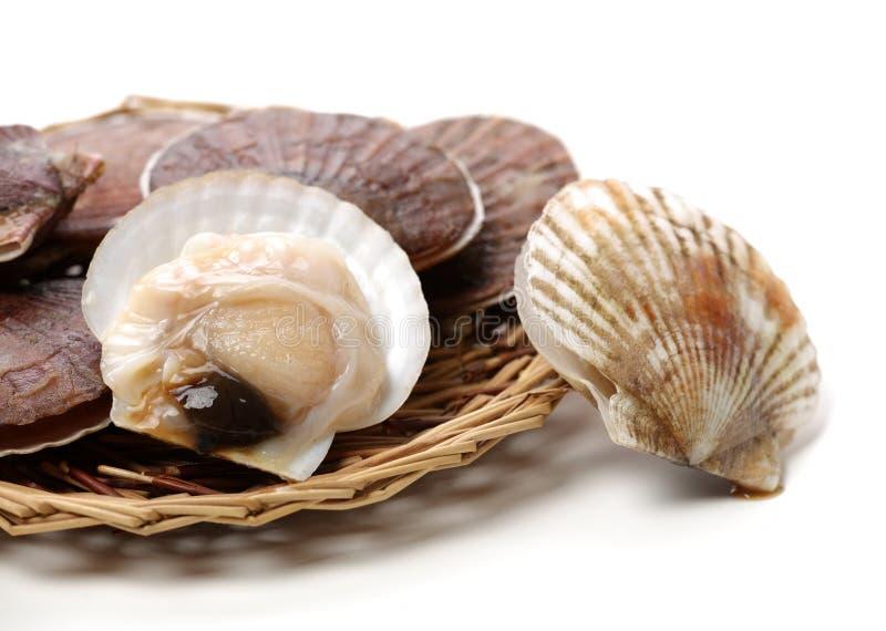 Raw scallop. On white background stock photo