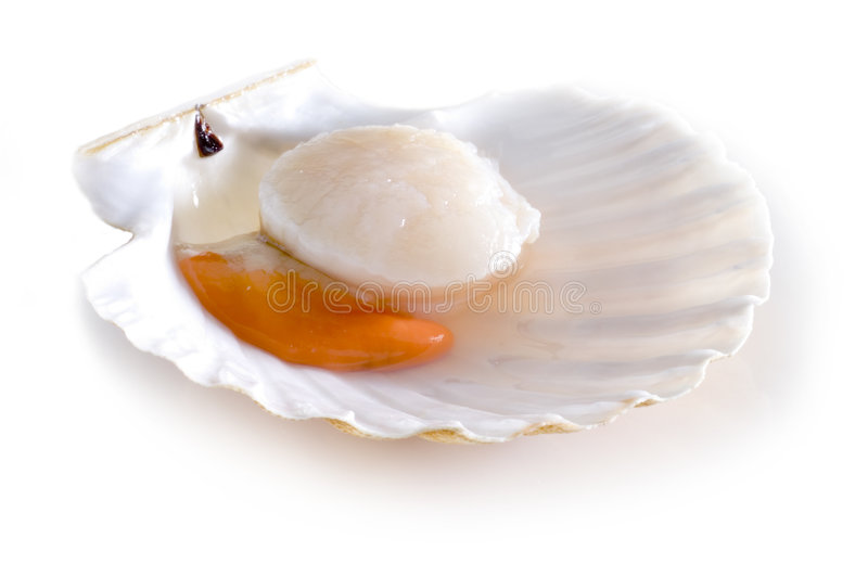 Download Raw scallop shell stock image. Image of seashell, scallop - 8614119
