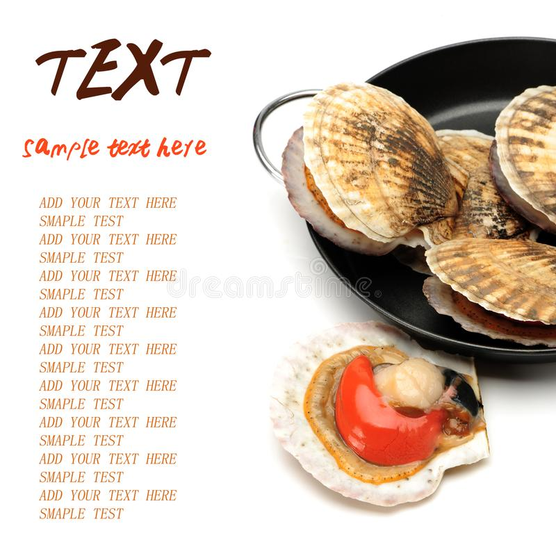 Raw scallop shell. On white Background stock photo