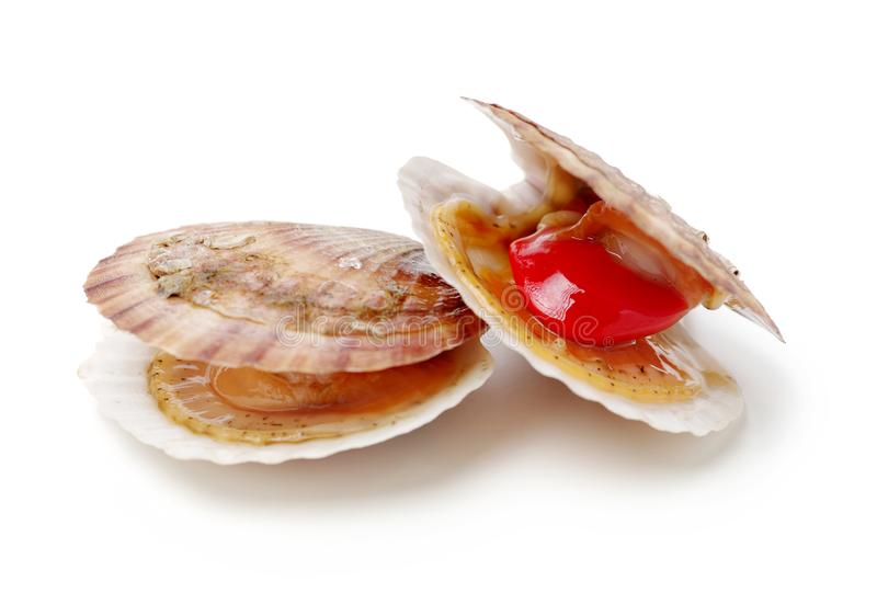 Raw scallop. On white background stock image