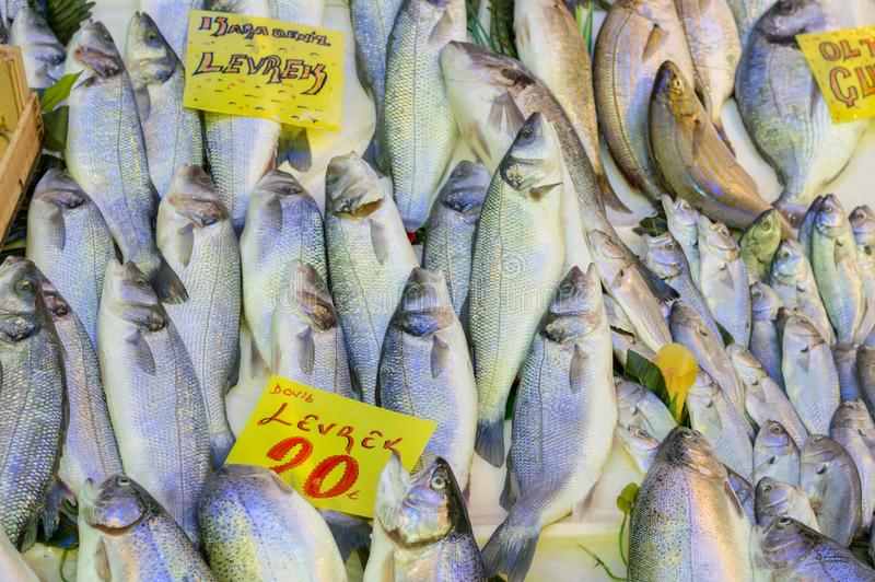 Raw sea bass for sale in the market. Pile of fresh sea bass fish with price tags on a counter in a fish bazaar in Turkey royalty free stock photography
