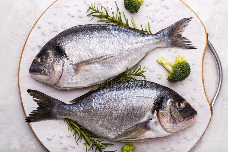 Raw sea bream fish. With rosemary and broccoli on white gray stone background.Healthy food concept, flat lay, copy space stock image