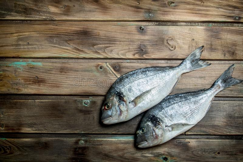 Raw sea fish dorado. On a wooden background royalty free stock photography