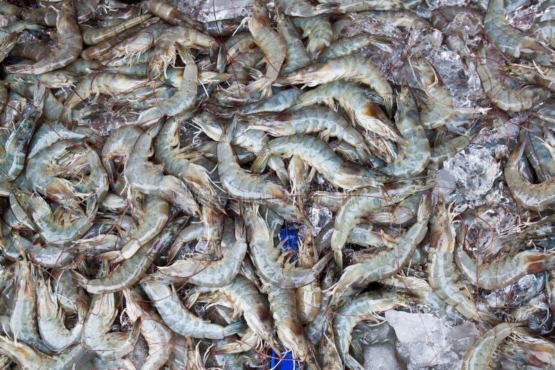 Download Raw Shrimp stock photo. Image of group, shop, tasty, restaurant - 24889408