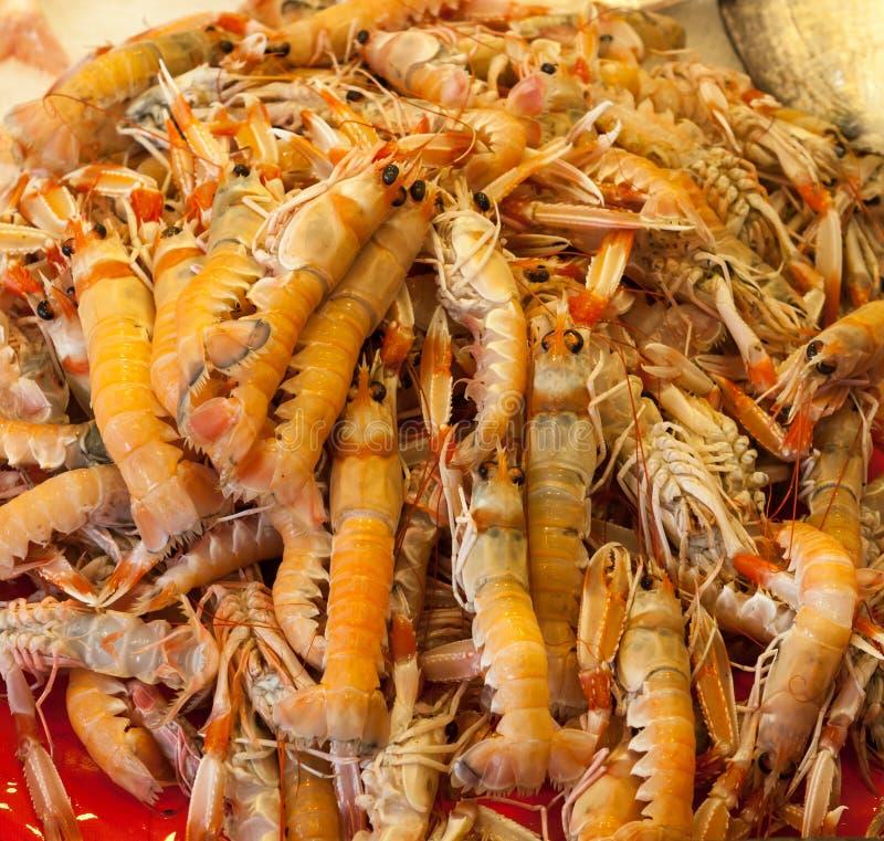 Raw Shrimp royalty free stock images