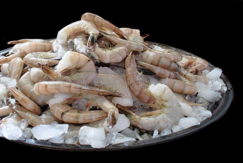Download Raw shrimp on ice stock photo. Image of shrimp, food, peel - 2479972