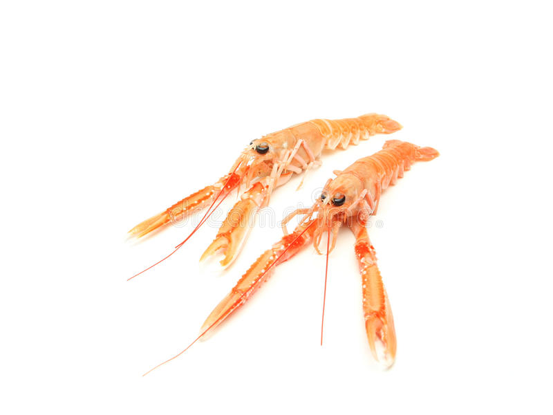 Download Raw shrimps stock image. Image of orange, fish, isolated - 16973183