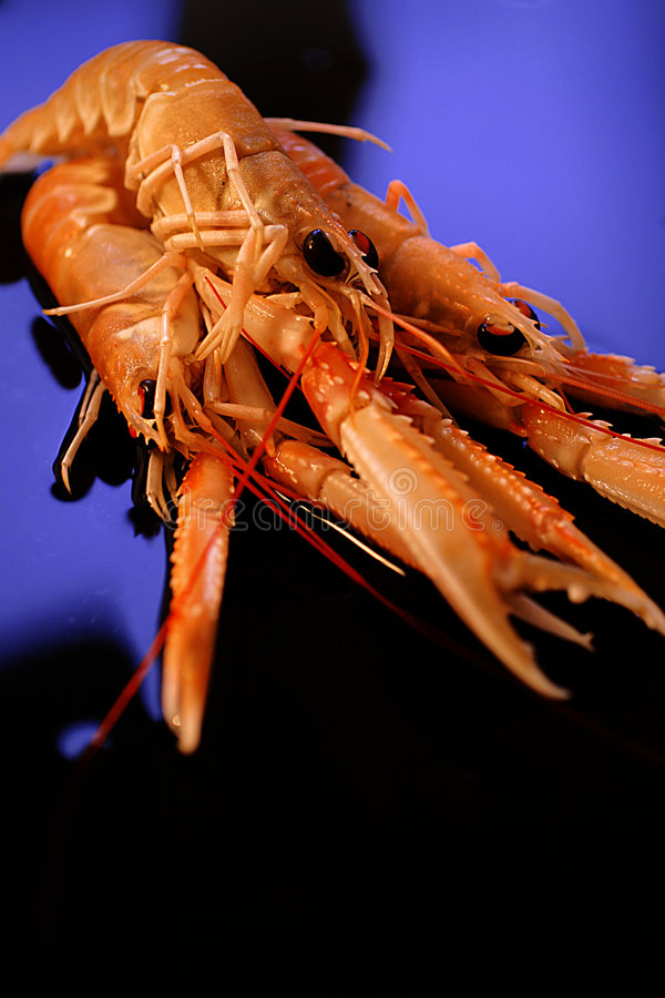 Download Raw shrimps stock photo. Image of cuisine, fish, seafood - 7560342