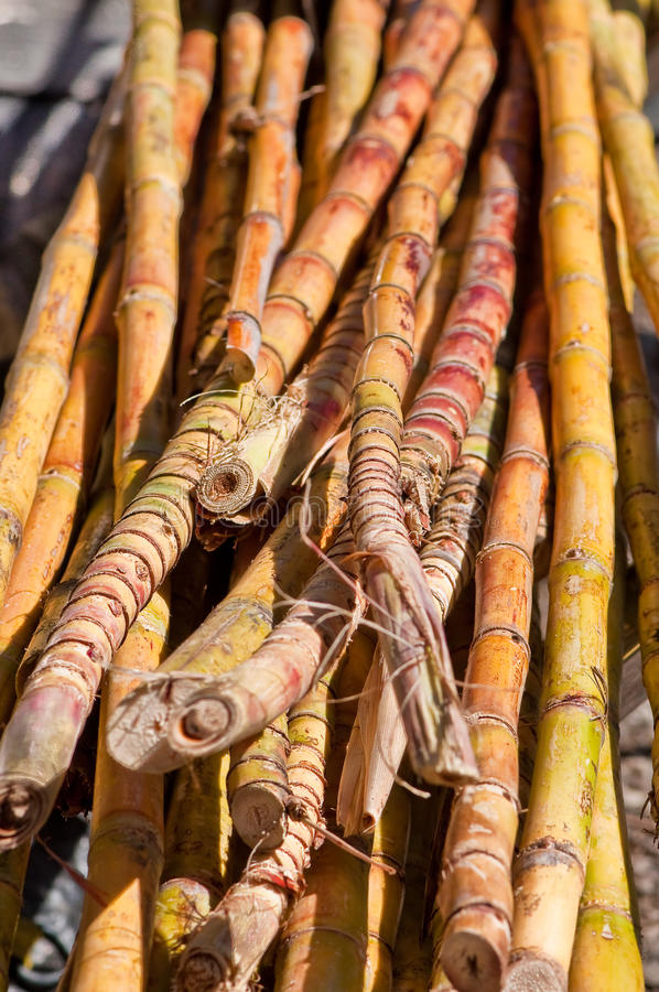 Raw sugar cane. In a pile waiting to be processed stock photo