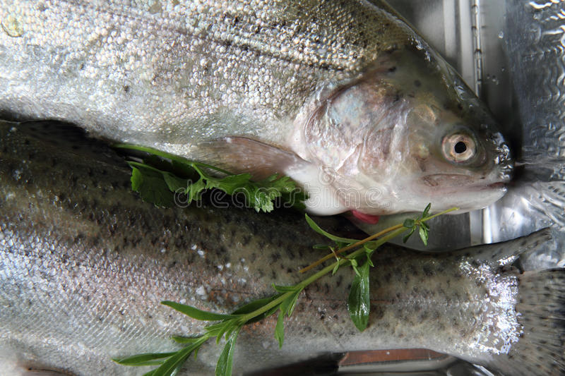 Download Raw trout fish stock photo. Image of trout, rainbow, freshwater - 25913666