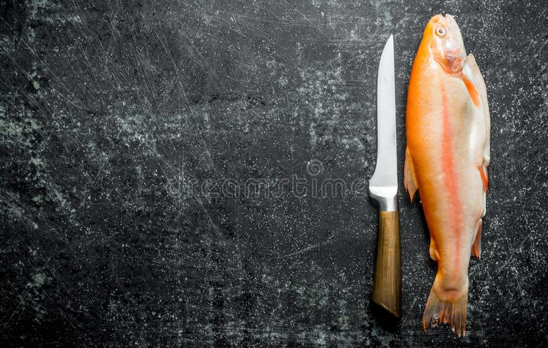Raw trout fish with knife stock image