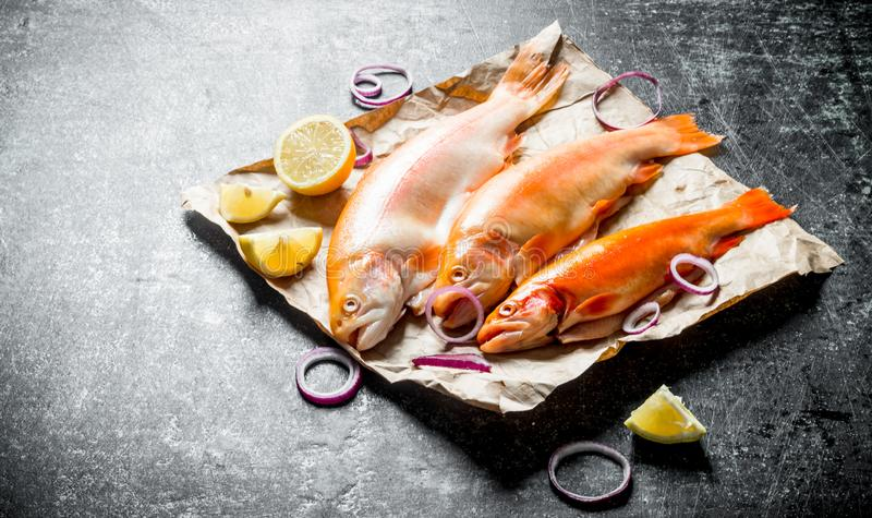 Raw trout fish on paper with onion rings and lemon slices. On dark rustic background stock image