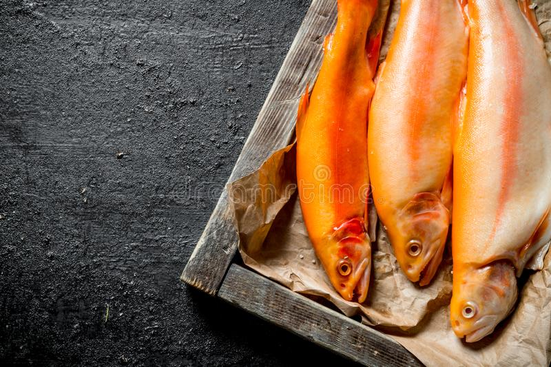 Raw trout fish on tray with paper. On black rustic background royalty free stock photos