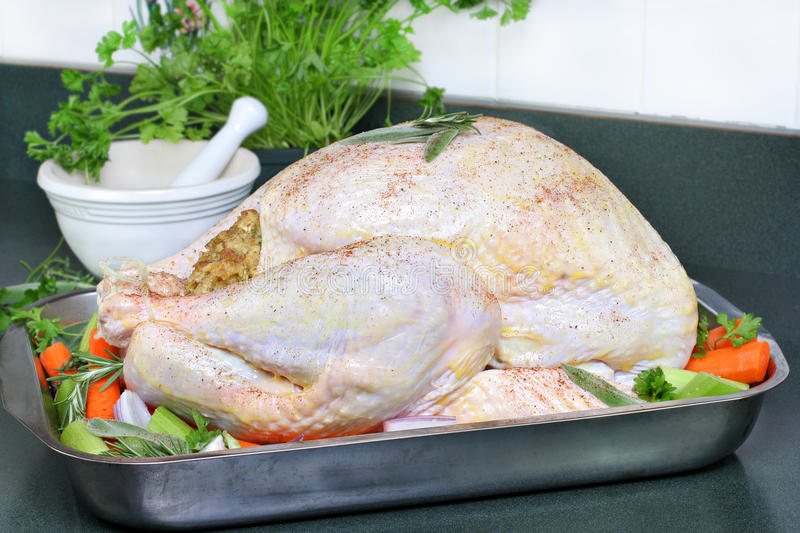 Raw turkey, dressed and ready to go into the oven. royalty free stock photos