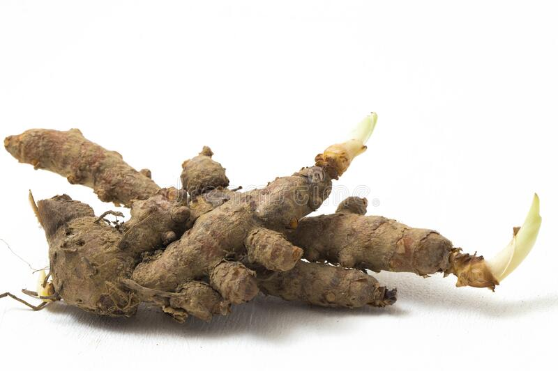 Raw turmeric Curcuma longa Linn or curcumin for making herbal medicine isolated. On white background royalty free stock photos