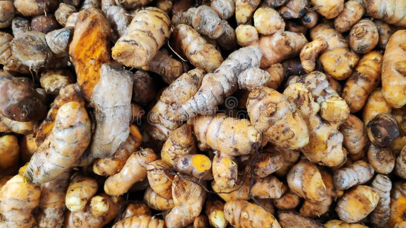 Raw turmeric roots royalty free stock image