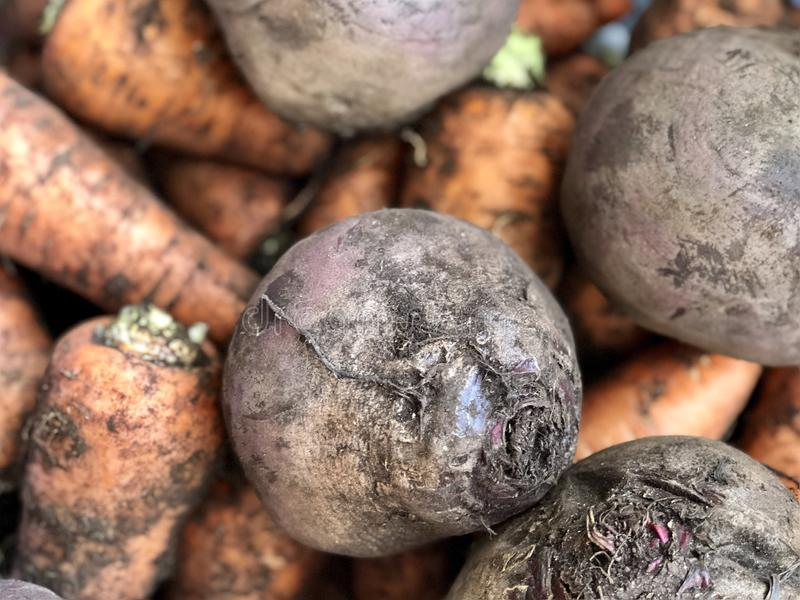 Raw vegetables: carrots and beets royalty free stock photos